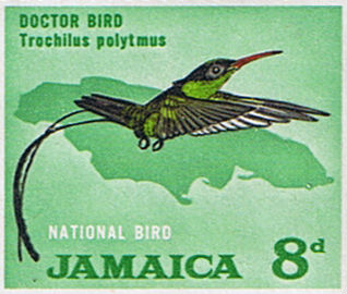 Doctor Bird - postage stamp
